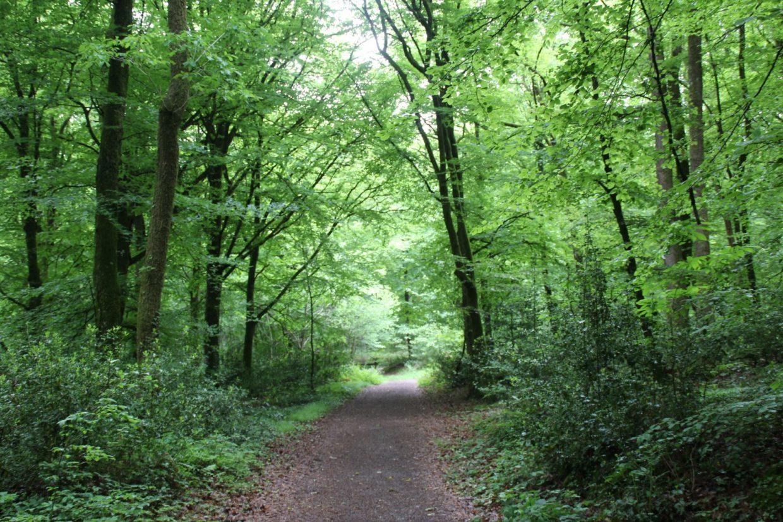 Forêt de Corbière (3)