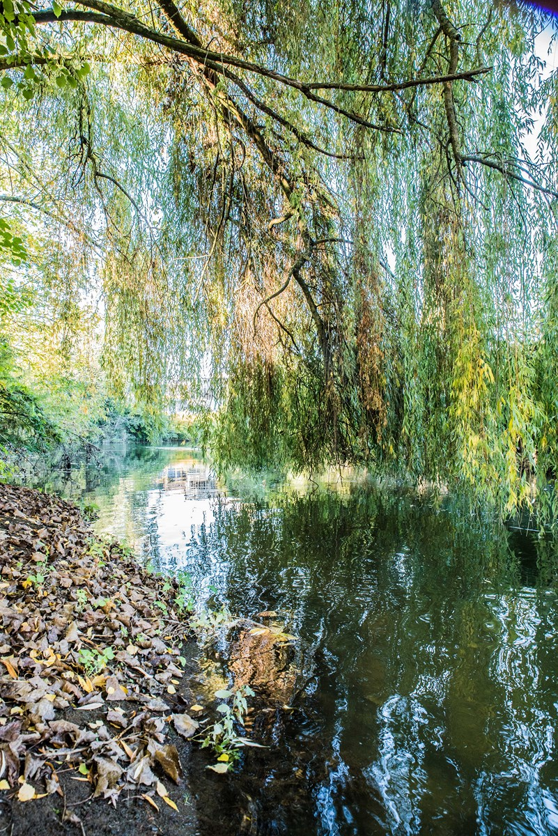 La Vilaine nature